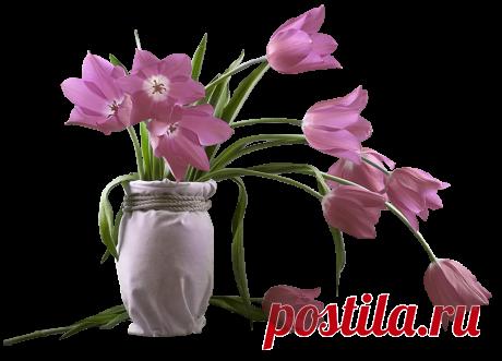 Цветы в горшках, вазах, корзинах