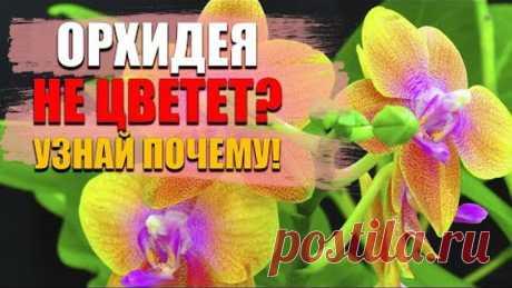 Орхидея. Как заставить цвести орхидею, чтобы росли корни и появились цветоносы  Супер простой способ