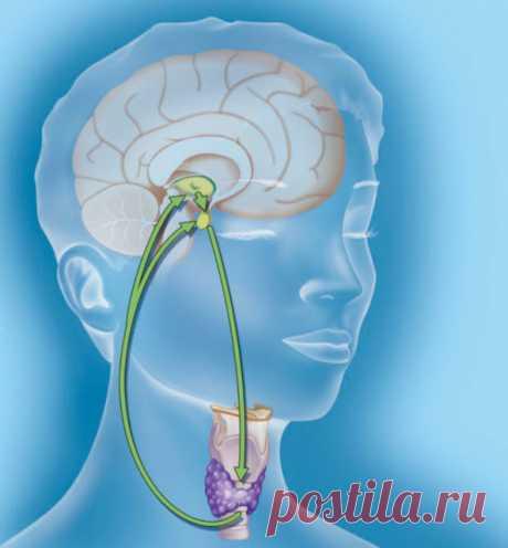 Здоровье женщин: 25 симптомов и признаков гормонального дисбаланса