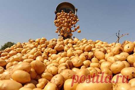 Так картофель ты еще не готовила! Самый аппетитный гарнир, который я ела… Изумительное лакомство с секретной добавкой! - Женская страница