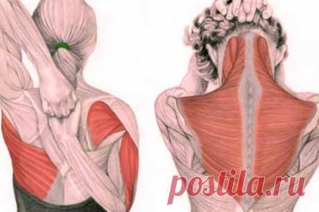Упражнения для шеи от зажимов и от давления.... Упражнения для шеи освобождают от зажимов и нормализуют давление! Эти упражнения предназначены для расслабления напряжённых мышц шеи и все вместе должны занимать 4–5 минут в день. Если их выполнять регулярно (лучше по утрам), то вскоре наступит расслабление мышц шеи и верхней части спины, что...