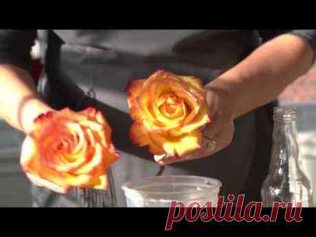 Flower preservation is a great way to cherish your flowers! Floral & Lifestyle Expert Julie Mulligan teaches you how to preserve fresh flowers in wax like a ...