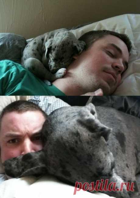 Забавные фотографии с собаками / Питомцы