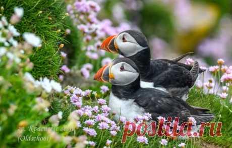 Яркие и верные жители Исландии, Фарерских островов - Тупики