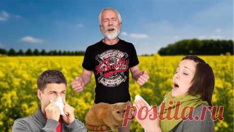 Как я за 2 недели полностью избавился от аллергии | Мудрый ЗОЖник | Яндекс Дзен