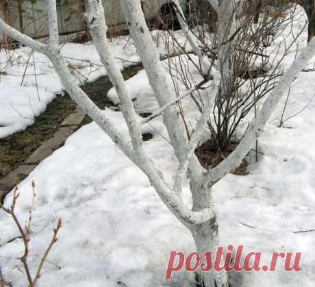 Март месяц в саду - чистим снег, обрезаем деревья, весенняя побелка, видео