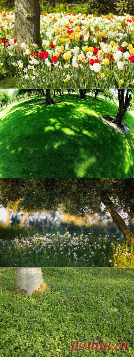 Вопрос не праздный… Что можно сажать под деревьями? — 6 соток