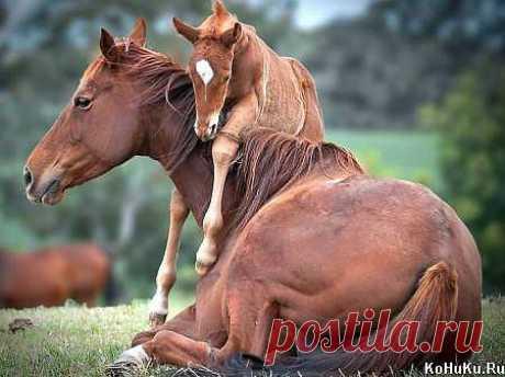 Мам, ну покатай меня! » Фото лошадей » Сайт о лошадях KoHuKu.ru