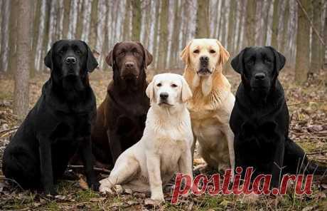 Самые верные и преданные породы собак