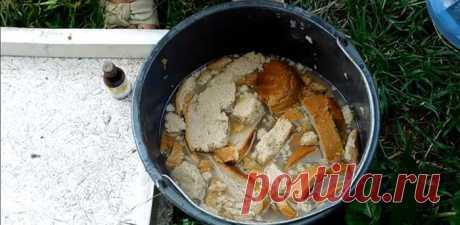 Натурально и эффективно: хлебная подкормка для огурцов и томатов