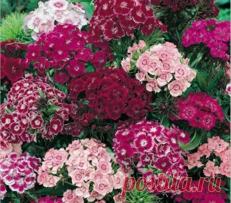 Cultivation and grades of a sectional carnation