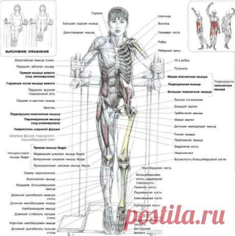 ПРЕСС. Подъемы коленей в упоре. Это упражнение разрабатывает мышцы - сгибатели бедер, в первую очередь подвздошно-поясничные, а также косые и прямые мышцы живота (особенно интенсивно задействованы их нижние части).