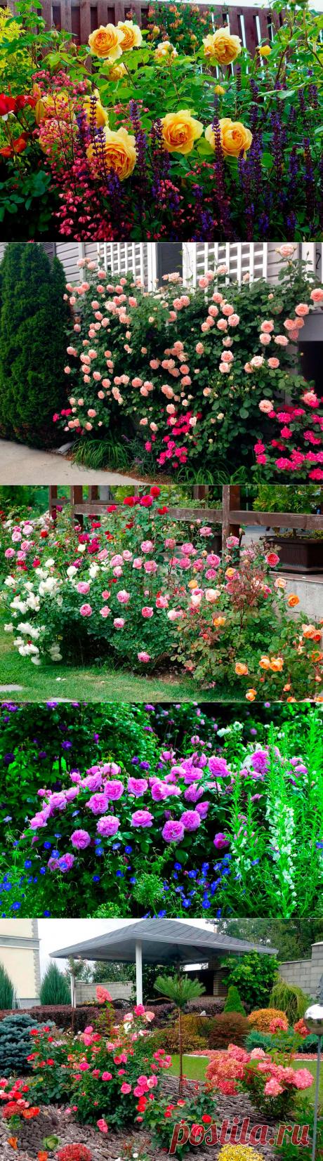 Красивая клумба из цветов розы своими руками. Советы по созданию, фото идеи
