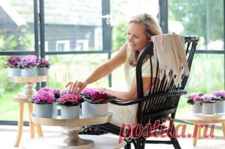 Особенности выращивания фиалок в домашних условиях — 70 фото