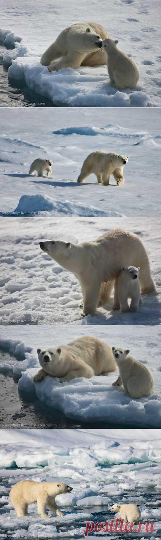 Медвежья любовь : НОВОСТИ В ФОТОГРАФИЯХ