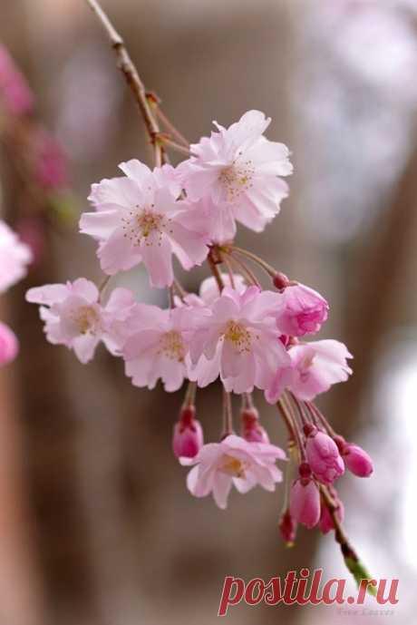 Пусть будет любовь в сердце, весна на душе и на улице, улыбка на лице и счастье в глазах!