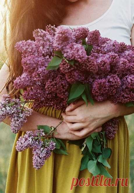 Пускай Весна подарит каждому из вас Улыбок море, радость, светлую надежду И дни уютные — без грусти, про запас, Да океан любви чарующе-безбрежной!.
