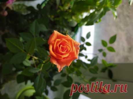 Избавиться от мошки в цветах раз и навсегда поможет   Домадил - DomaDeaL.Ru   Яндекс Дзен