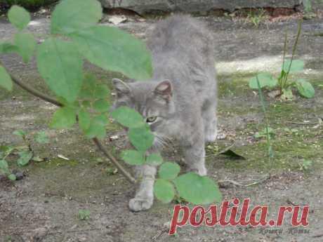 Спрятавшиеся коты | Кошки & Коты | Яндекс Дзен Коты умеют прятаться, скрываться, маскироваться, оставаться незамеченными. Иногда они это делают специально. Потому что надо: сидят в засаде, охотятся, наблюдают за кем-то, выслеживают кого-то. Или потому что хочется спрятаться от чьего-то назойливого внимания, будь то человек, собака, другой кот...