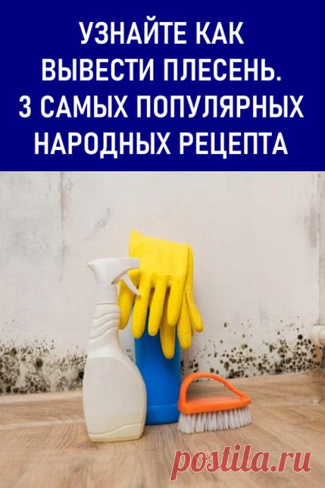 Узнайте, как вывести плесень. 3 самых популярных народных рецепта. Вы обнаружили плесень на стенах или других поверхностях? Дом выглядит не эстетично, и в нем пахнет затхлостью? А вы не хотите вдыхать вредные споры грибков плесени. В нашей статье вы найдете рекомендации и советы как вывести домашнюю плесень. #мойдом #плесень #каквывестиплесень