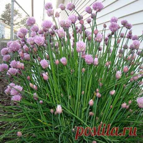 На данном изображении может находиться: растение, цветок, на улице и природа