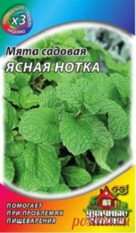 """Семена. Мята садовая """"Ясная нотка"""" (вес: 0,05 г) Всхожесть: 70%. Многолетнее кустистое растение из семейства Губоцветные. Стебли прямостоячие, до 65 см в высоту. Листья овальные, зеленые, со слабой антоциановой окраской. Цветки мелкие, сиреневые, собраны в вытянутое соцветие. В лекарственных целях используют листья и эфирное масло..."""