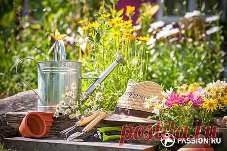 Недовольны жизнью? Отправляйтесь в огород! | passion.ru