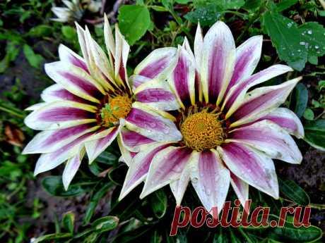 Цветы не думают о людях, Но люди грезят о цветах.... Цветы не видят в человеке Того, что видит он в цветке......(И.Северянин)