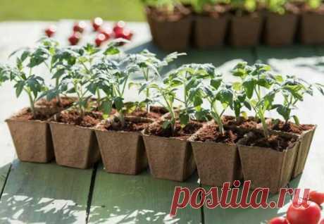 Как правильно выбрать время для посадки семян