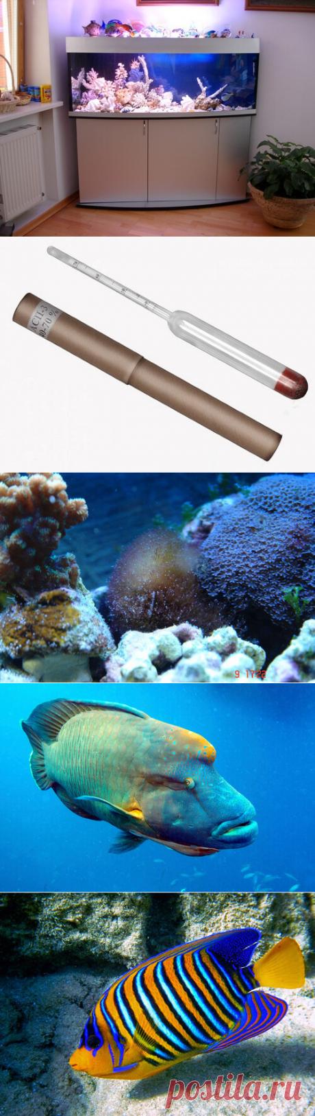 Запуск морского аквариума: пошаговая инструкция в домашних условиях