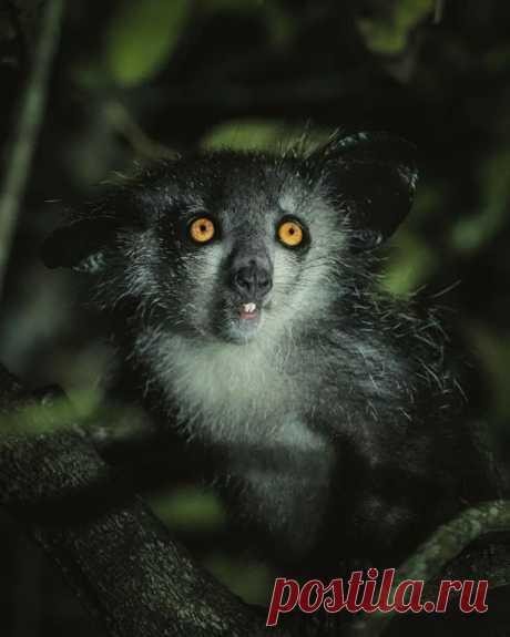 Потрясающие фотографии животных Мадагаскара