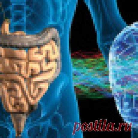 За мозг человека отвечают бактерии в кишечнике Современные исследования доказали, что микрофлора кишечника может влиять на мозг.     Два килограмма бактерий системы пищеварения, в зависимости от того, какие именно микробы, грибы, археи там преобладают, ...