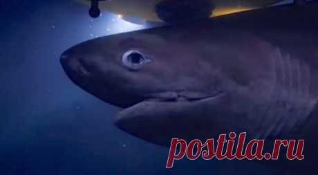 Атаку гигантских акул на подводную лодку сняли на видео - фрагменты из жизни | Tengrinews