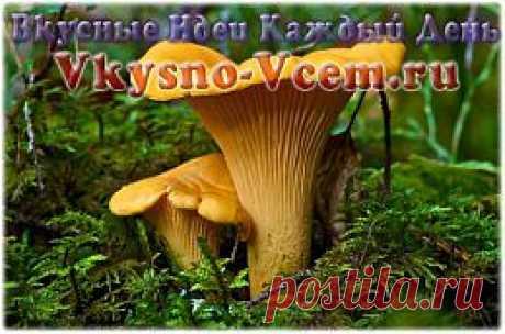 Лисички консервированные. Самый яркий и полезный гриб Средней полосы России — это лисичка. Рецепты консервирования не требуют особых знаний и умений в обработке гриба. Икру из лисичек или маринованные грибы сможет приготовить даже начинающий кулинар. Рецепт лисичек для гурманов приятно удивит даже самых взыскательных грибников.