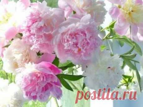 Милые цветы для Вашего дома