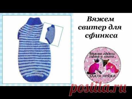 Вяжем свитер для сфинкса