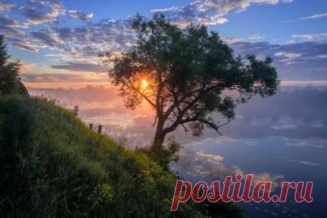 Мягкий утренний свет и туман нарисовали красочный пейзаж на берегу реки Дубна. Его запечатлел Андрей Чиж: nat-geo.ru/photo/user/333938/ Доброе утро!