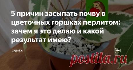 5 причин засыпать почву в цветочных горшках перлитом: зачем я это делаю и какой результат имею?