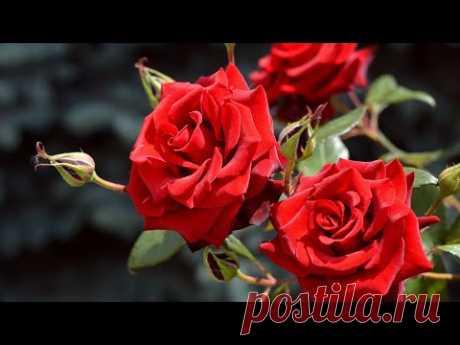 Музыка для Души и Цветы (Beautiful flowers) !!!