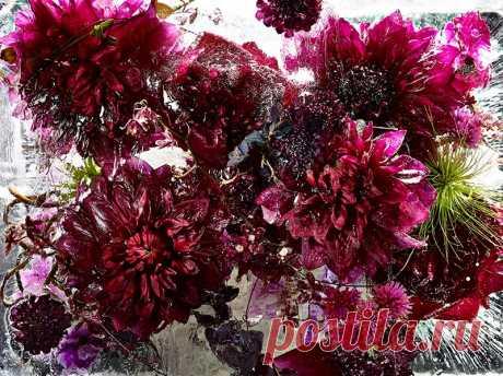 The frozen flowers from Kendzi Sibat (15 photos)