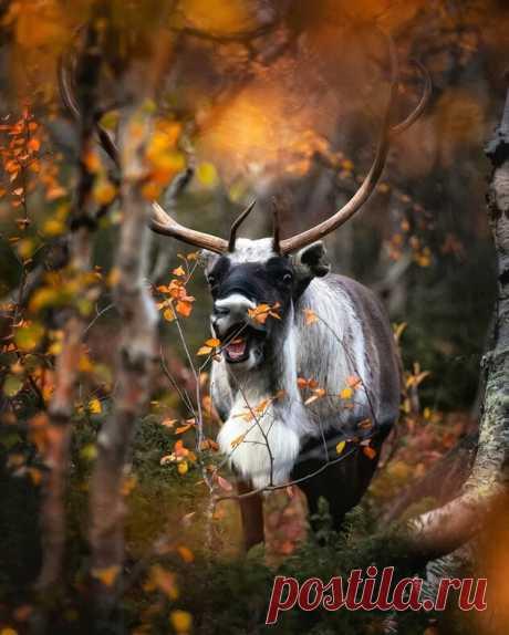 Магическая красота живой природы Финляндии: фото, от которых сложно оторваться — блог туриста Anna_Kambarova на Туристер.Ру