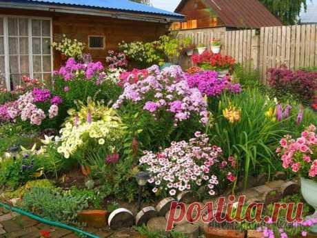 Цветы на клумбе – правильное соседство Создать на участке цветник не всегда бывает так легко, как кажется. Недостаточно подбирать растения только лишь по красоте, необходимо также учитывать их совместимость. Одни цветы положительно действу...