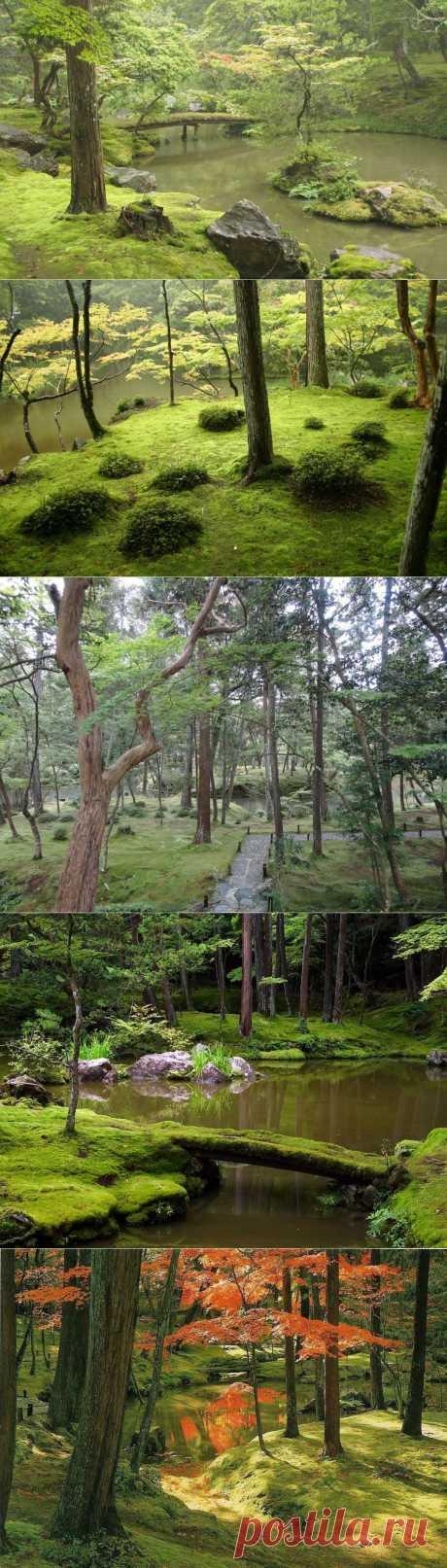 Сад мхов в Японии