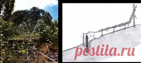 Удивительный, творческий и загадочный народ Абелам в Новой Гвинее (нравы, традиции, особенности) | Мир+ | Яндекс Дзен