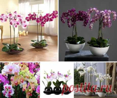 8 ПРОСТЫХ СОВЕТОВ - ОРХИДЕИ ДЛЯ НАЧИНАЮЩИХ 8 ПРОСТЫХ СОВЕТОВ - ОРХИДЕИ ДЛЯ НАЧИНАЮЩИХ Совет первый — покупка Всегда покупайте орхидеи только в том месте, где вы уже приобретали что-то хорошее или