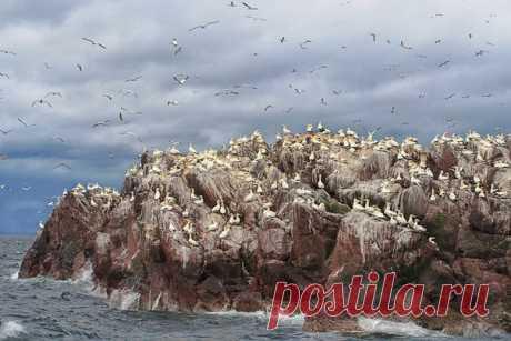 Once mil de amigos olushi. La roca el Bass-destino, Escocia. El autor de la foto – Olga Tarasyuk: nat-geo.ru\/photo\/user\/298392\/