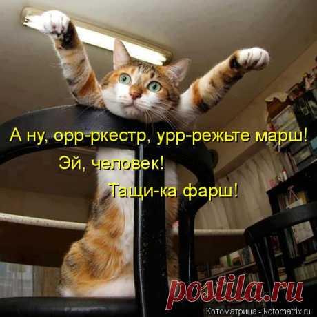 Лучшие котоматрицы недели (51 фото) Прикольные картинки от сайта Котоматрица.