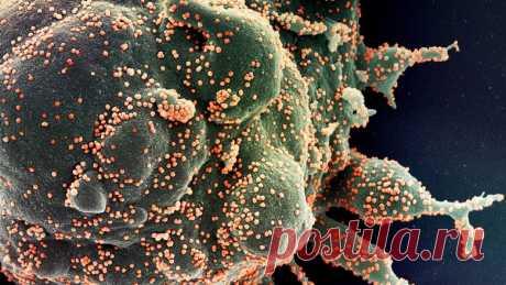 Ученые назвали условие, при котором коронавирус уничтожается за 25 секунд - Новости Mail.ru