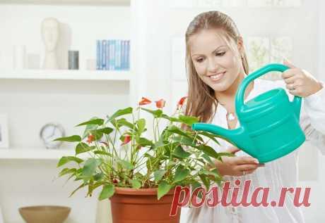 Чем подкармливать комнатные растения?   Простые советы