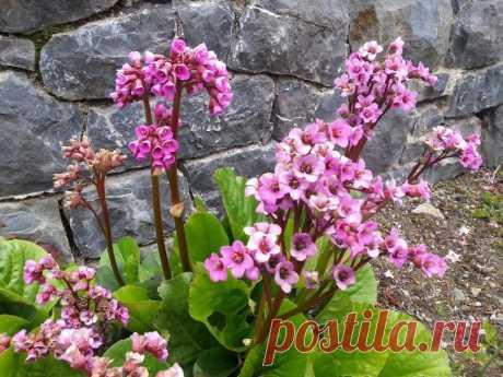 El catálogo de las flores perennes para la casa de campo: la foto con los nombres y la descripción de las plantas